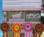 2013-05-05-lt-retriever-club-show-img_1678