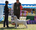 2013-05-05-lt-retriever-club-show-img_1701