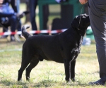 2013-05-05-lt-retriever-club-show-img_1730