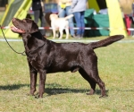 2013-05-05-lt-retriever-club-show-img_1736