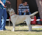 2013-05-05-lt-retriever-club-show-img_1751