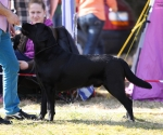 2013-05-05-lt-retriever-club-show-img_1760