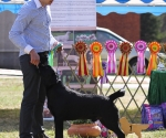 2013-05-05-lt-retriever-club-show-img_1771