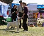 2013-05-05-lt-retriever-club-show-img_1784
