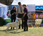 2013-05-05-lt-retriever-club-show-img_1790