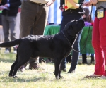 2013-05-05-lt-retriever-club-show-img_1795