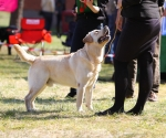 2013-05-05-lt-retriever-club-show-img_1822