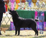 2013-05-05-lt-retriever-club-show-img_1831