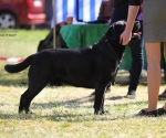 2013-05-05-lt-retriever-club-show-img_1841