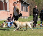 2013-05-05-lt-retriever-club-show-img_1848