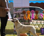 2013-05-05-lt-retriever-club-show-img_1872