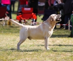 2013-05-05-lt-retriever-club-show-img_1889