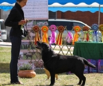 2013-05-05-lt-retriever-club-show-img_1897