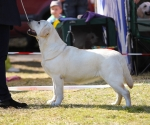 2013-05-05-lt-retriever-club-show-img_1929