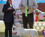 2013-05-05-lt-retriever-club-show-img_1965