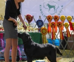 2013-05-05-lt-retriever-club-show-img_1972
