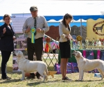 2013-05-05-lt-retriever-club-show-img_1977