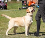 2013-05-05-lt-retriever-club-show-img_1983
