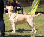 2013-05-05-lt-retriever-club-show-img_1989