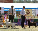 2013-05-05-lt-retriever-club-show-img_2033