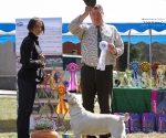 2013-05-05-lt-retriever-club-show-img_2040