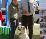 2013-05-05-lt-retriever-club-show-img_2101