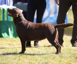 2013-05-05-lt-retriever-club-show-img_2129