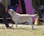 2013-05-05-lt-retriever-club-show-img_2175