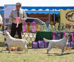 2013-05-05-lt-retriever-club-show-img_2185