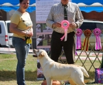 2013-05-05-lt-retriever-club-show-img_2187