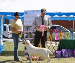 2013-05-05-lt-retriever-club-show-img_2195