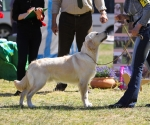2013-05-05-lt-retriever-club-show-img_2228