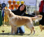 2013-05-05-lt-retriever-club-show-img_2270
