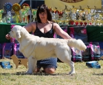 2013-05-05-lt-retriever-club-show-img_2273