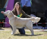 2013-05-05-lt-retriever-club-show-img_2282