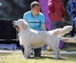 2013-05-05-lt-retriever-club-show-img_2288