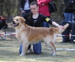 2013-05-05-lt-retriever-club-show-img_2294