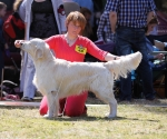 2013-05-05-lt-retriever-club-show-img_2300
