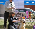 2013-05-05-lt-retriever-club-show-img_2324
