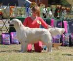 2013-05-05-lt-retriever-club-show-img_2340