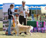 2013-05-05-lt-retriever-club-show-img_2347