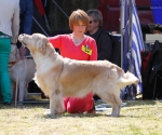 2013-05-05-lt-retriever-club-show-img_2354