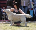 2013-05-05-lt-retriever-club-show-img_2361