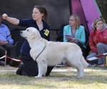 2013-05-05-lt-retriever-club-show-img_2364