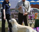 2013-05-05-lt-retriever-club-show-img_2367