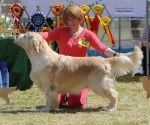 2013-05-05-lt-retriever-club-show-img_2372