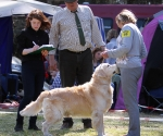 2013-05-05-lt-retriever-club-show-img_2385