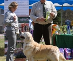 2013-05-05-lt-retriever-club-show-img_2390
