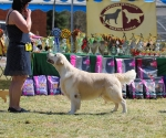 2013-05-05-lt-retriever-club-show-img_2411