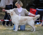 2013-05-05-lt-retriever-club-show-img_2436